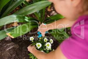 Cropped image of woman cutting flowering plant with pruning shears