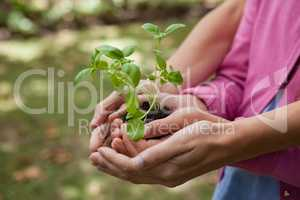 Midsection of woman and daughter holding seedling in cupped hands