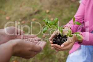 Girl giving seedling to cropped cupped hands of mother