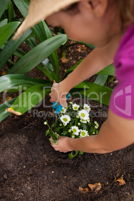 Cropped image of woman using pruning shears on flowering plant