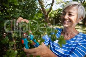 Smiling senior woman trimming plants with pruning shears