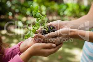 Cropped cupped hands of mother giving seedling to girl