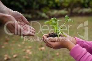 Cropped cupped hands of mother with girl holding seedling