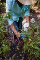 Low section of senior woman cutting flowers with pruning shears