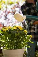Woman watering yellow flowers in backyard