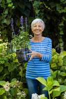 Portrait of smiling senior woman holding purple flower pot amidst plants