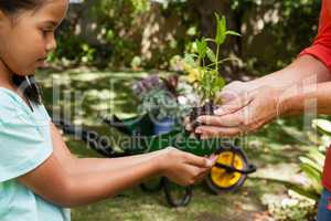 Midsection of senior woman giving seedling to granddaughter