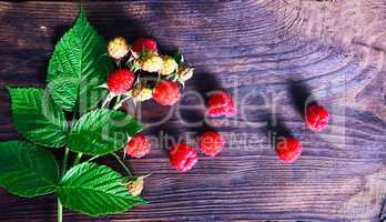 Branch of a raspberry bush with red berries