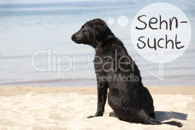 Dog At Sandy Beach, Sehnsucht Means Desire