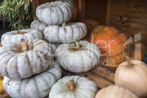 White and orange pumpkings wonder