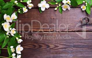Branches of jasmine with white flowers