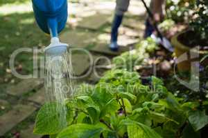 Senior couple watering plants with watering can in garden