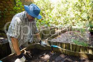 Senior man planting young plant into the soil
