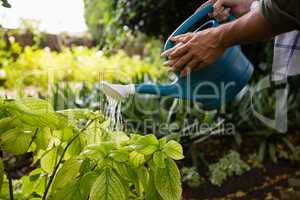 Mid-section of couple watering plants with watering can in garden