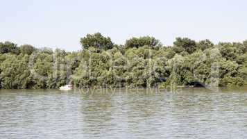 Danube River with Fishing Boat And Treeline in the Background