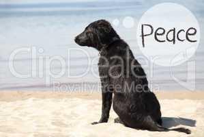 Dog At Sandy Beach, Text Peace