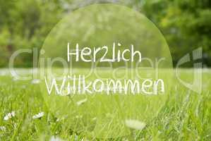 Gras Meadow, Daisy Flowers, Herzlich Willkommen Means Welcome