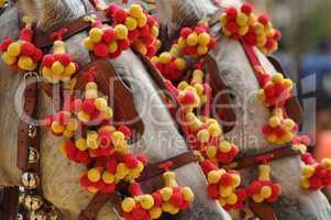 Horses decked in fair