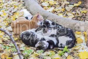 Set of cats curled up sleeping together for warmth