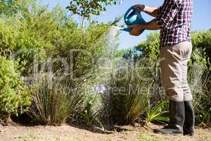 Man watering plants with watering can in garden