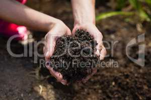 Close-up of woman holding soil in garden