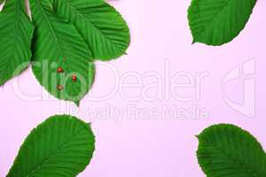 Abstract pink background with green leaves of chestnut