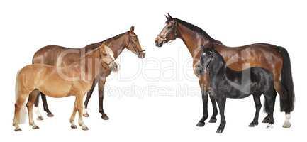 pferderassen verschiedene freigestellt