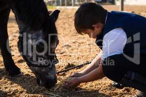 Boy feeding the horse in the ranch