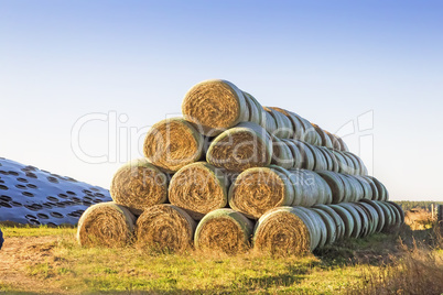 Hay bales for animal feed.