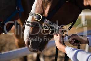 Hand of female vet adjusting horse bridle at barn