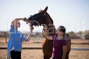 Woman assisting vet for checking horse teeth