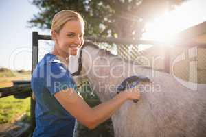 Female jockey cleaning horse with sweat scraper at barn