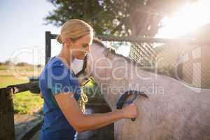 Jockey cleaning horse with sweat scraper at barn
