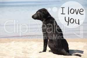 Dog At Sandy Beach, Text I Love You