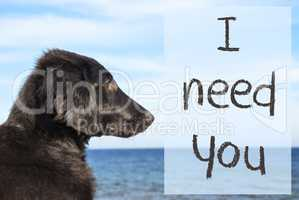 Dog At Ocean, Text I Need You