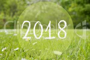 Gras Meadow, Daisy Flowers, Text 2018