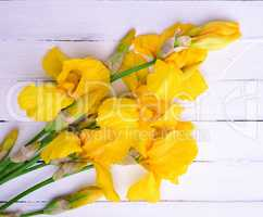 Bouquet of yellow blossoming irises