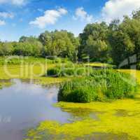 Wet lake with aquatic vegetation.