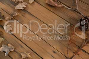 high angle view of pine cone and dried leaves