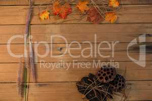 Overhead view of autumn leaves by reed and plant pods