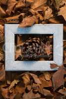 Overhead view of pine cone amidst frame