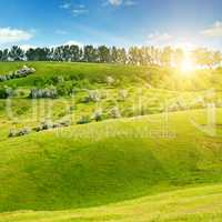 Hilly green fields and sun on blue sky