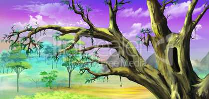 African Tree with Big Hollow against Purple Sky
