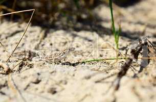 lizard crawling on sand