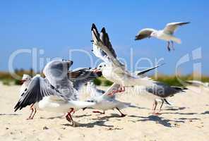 flock of sea gulls in flight on a sandy beach