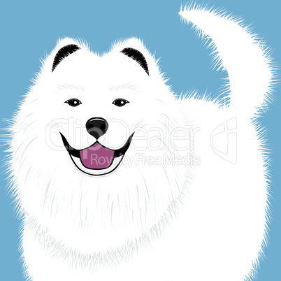 Dog samoyed, buddy puppy vector illustration