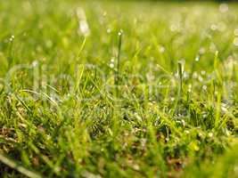 Grass with soft bokeh