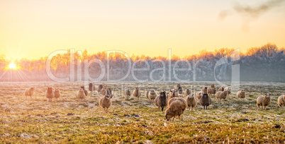Winter in East Frisia