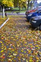 Yellow and red autumn leaves, fallen on asphalt and cars