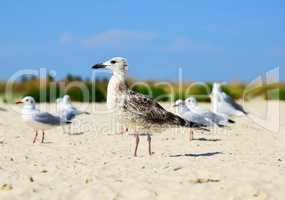 sea gull is standing on the sand